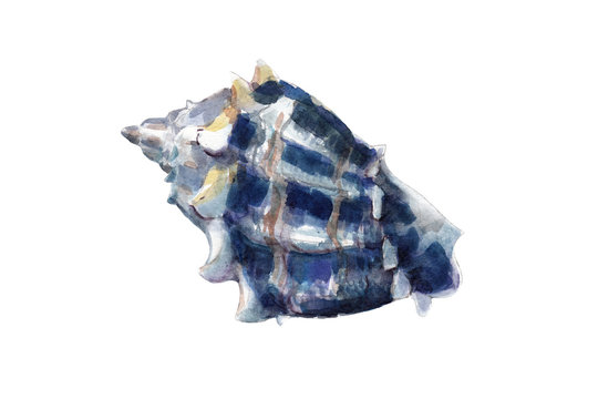 Watercolor illustration, hand drawn blue seashell isolated object on white background.