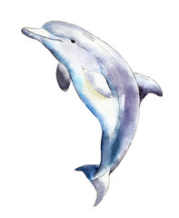Watercolor dolphin,  hand-drawn illustration isolated on white background.