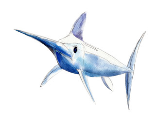 Watercolor swordfish, blue marlin, hand-drawn illustration isolated on white background.