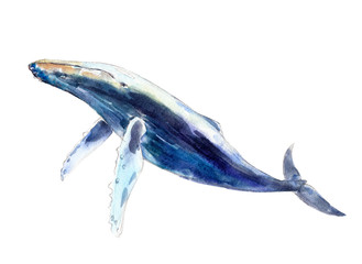 Watercolor whale, hand-drawn illustration isolated on white background.