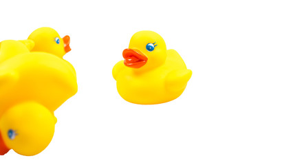 Yellow toy ducks with orange beaks seen from above while swimming, white background.
