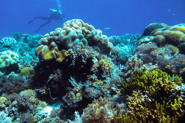 Coral reefs in the Komodo National Park. Under the water. Diving