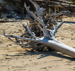old tree on sandy beach
