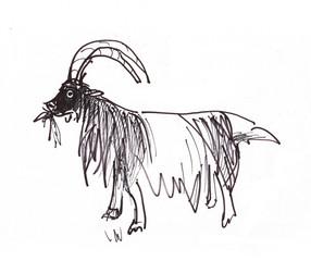 Instant sketch, goat