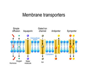 Types of a channel in the cell membrane