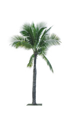 Coconut tree isolated on white background used for advertising decorative architecture. Summer and beach concept