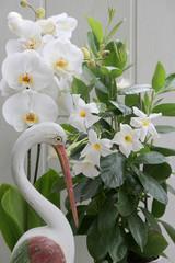 Weiße Orchidee und weiße Mandevilla mit Holz-Storch als Zimmerdekoration