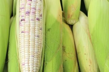 fresh corn at market
