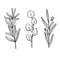 hand drawn herbs set