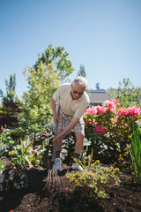 Happy, older caucasian man gardening on sunny day