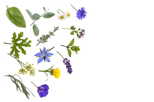 various fresh herbsand medicinal plants rosemary, ,thyme and peppermint leaves with entral copy space on white background.