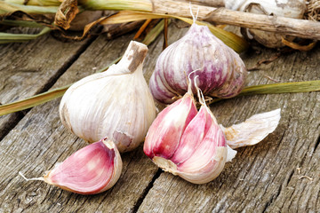Whole garlic with broken bulb and pink cloves and foliage on rustic wooden board.