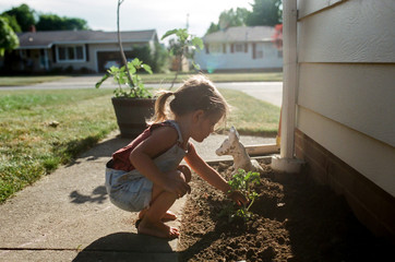 little girl planting garden