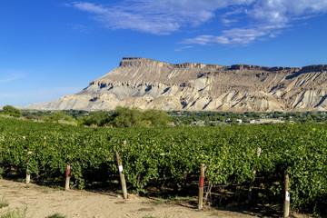 Wine Vineyards in Colorado River Valley