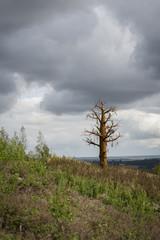 Staty träd