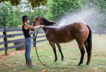 Teenage girl spraying her horse after a trail ride