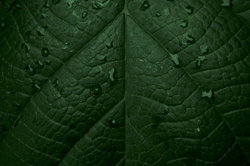 Abstract Green Tropical Leaf Background. Close up