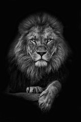 Foto op Canvas Bestsellers Kids King Lion