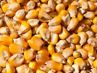Closeup Corn Kernels