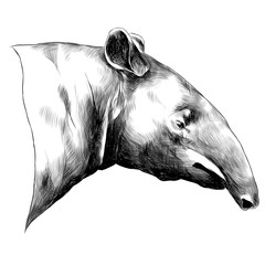 aardvark sketch vector graphics head black-and-white monochrome pattern