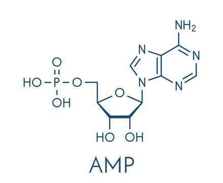 Adenosine monophosphate (AMP, adenylic acid) molecule. Nucleotide monomer of RNA. Composed of phosphate, ribose and adenine moieties. Skeletal formula.