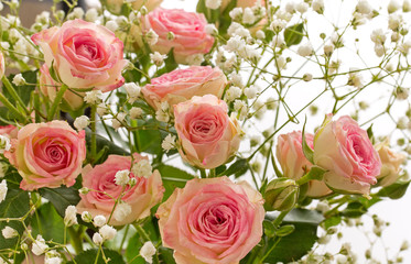 Small decorative pink roses  with small white flowers, close-up.