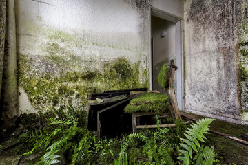 abandoned chair with moss and plants