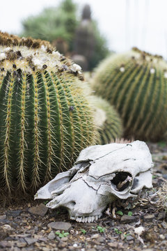Cactus Skull