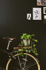 Closeup of a bicycle holding books and a plant on black wall.
