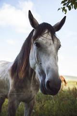 Portrait of Horse