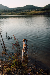 Dog standing in the lake