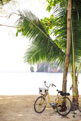 Bicycle parker near palm tree on beach