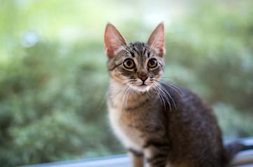 Wide eyed tabby kitten in the window