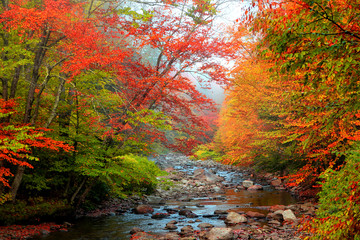 Water stream in rural Vermont in autumn time