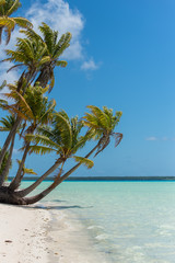 Tropical beach, lagoon, in French Polynesia, with coconut tree on the white sand beach