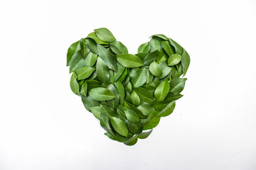Wall Mural - green leaves in heart shape on white background. flat lay. Tropical plant green leaves spring time, environment and love protected earth day concept. Close up leaves