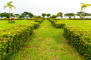 A Path to the Center of a Garden with Flowers and Green Plants on Both Sides