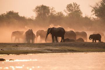 Elephants dust bathing at sunset, Chobe River, Chobe National Park