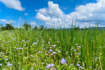 Defocus of flowers in the field.