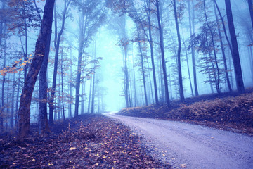 Wall Mural - Dreamy foggy mysterious colored forest road landscape.
