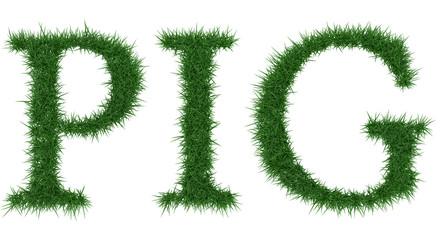 Pig - 3D rendering fresh Grass letters isolated on whhite background.