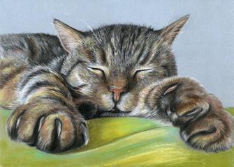 Pastellzeichnung Portrait schlafende Katze räkelt sich auf Decke