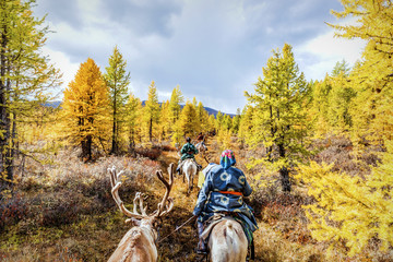 Tsaatan reindeer herders riding across the autumn forest