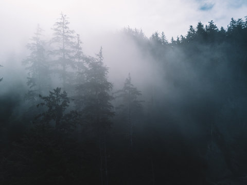 Trees in fog with sun lighting through