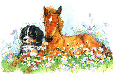cute Horse. Pet animal on flowering meadow background. foal illustration watercolor