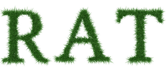 Rat - 3D rendering fresh Grass letters isolated on whhite background.