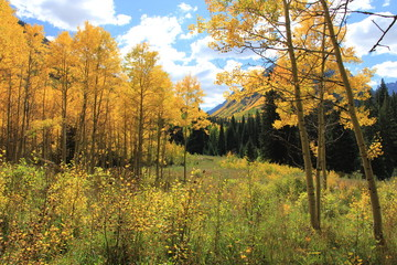 Fall Colors, Aspen Colorado