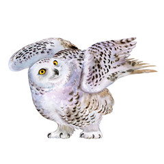 Snowy polar owl in flight isolated on background. Watercolor. Ilustration