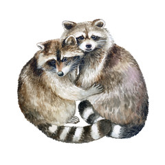 Raccoons embrace. Raccoon isolated on white background. Watercolor. Illustration. Picture. Image