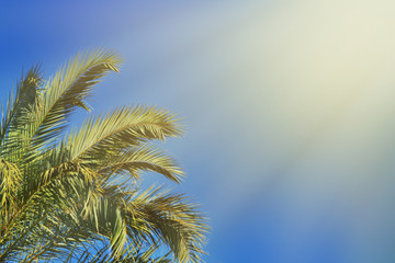 Palm leaves against the blue sky in the rays of the bright sun. Tropical background. Place for text.